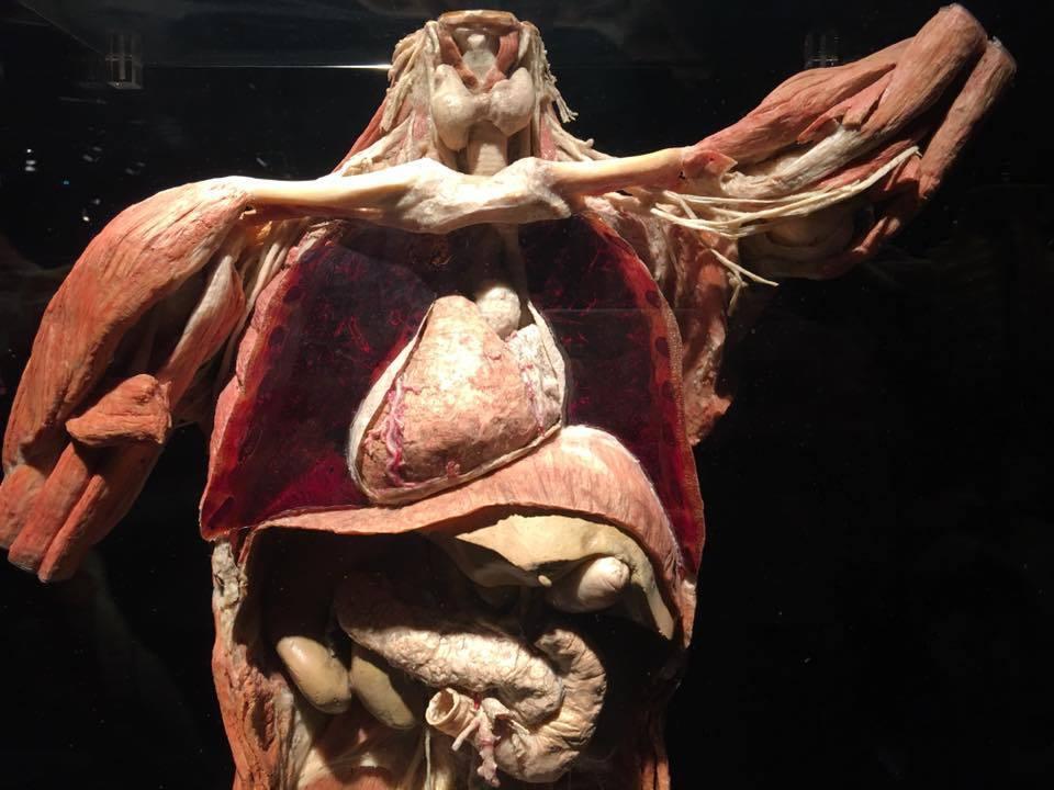 筋膜インテグレーション